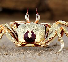 Stalk-eyed ghost crab - I'm outa here!! by Normf