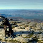 Tarn the Terrier... on Cairngorm by Jamie  Green