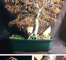Autumn Bonsai, wire tree sculpture by Sal Villano