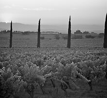 Vineyard dawn by Peter Falkner