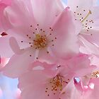 Blossoms Blooming by art2plunder