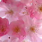 Spring Blooms by art2plunder