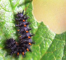 Fuzzy caterpillar eating a leaf by Michael Brewer