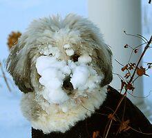 Snowdog by Victoria Jostes