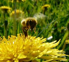 Busy Bee by 5erg