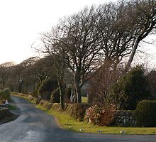 Wind Bent Beech Trees,Nr.Kill Village,Co.Waterford. by Pat Duggan