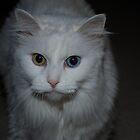 two eyed cat by kaylaseeme
