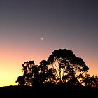 Sunset at the Farm in Queensland by ElsieByrne