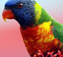 Rainbow Lorikeet - NSW by CasPhotography