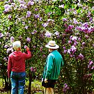 In the Lilac Garden by Susan Savad