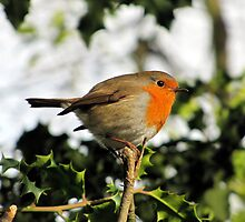Robin on Holly by Caroline Anderson