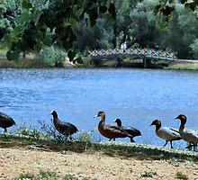 Daylesford Lake by WendyJC