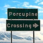 Porcupine Crossing by Sally Winter