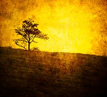 There will always be a tree by Carlos Restrepo