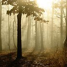 Golden Foggy Forest by NatureGreeting Cards ccwri