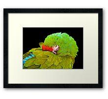 Military Macaw (Ara militaris) Framed Print