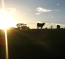 cows  amidst the sunset  by bekkykeong