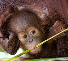 Chewing  by Anne Young