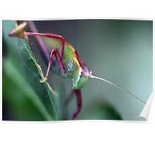 Grasshopper on Leaf Poster