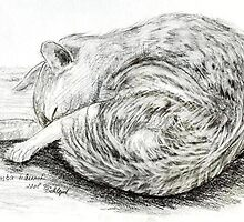 sleeping cat by Birgits