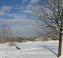 Snowy Common by Gill Langridge