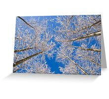 Look Up! Greeting Card
