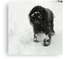 Samson in the snow Canvas Print