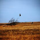 Bald Eagles Flight by kclcarlson