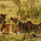 Masai Mara - Lioness with cubs by kczpics