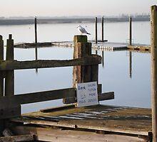 Seagull by AC Faithfull