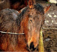Wet Foal by Stan Owen