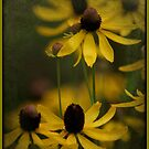 Black Eyed Susans by Nancy Bray
