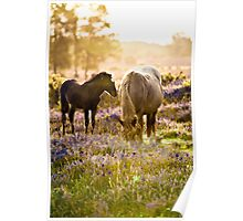 Horse and foal in the New Forest Poster
