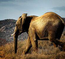 Golden Elephant by serendip