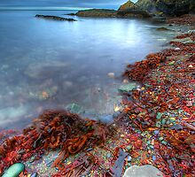 Red Shore by Gerry Chaney
