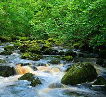 Claddagh River. Fermanagh.Ireland by EUNAN SWEENEY