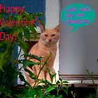 Kitty Valentine by R&PChristianDesign &Photography