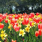 Dallas Blooms by Susan Russell
