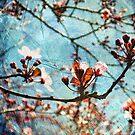 Blossom Skies by karolina