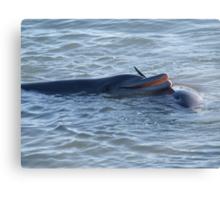 friendly dolphin Canvas Print