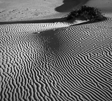 Dunes at Anna Bay 2 by Denise McDermott