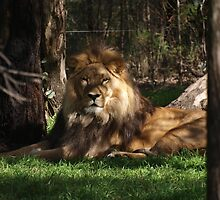 The King surveys his kingdom by Rodney O'Keeffe