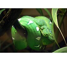 Neon Green Snake Photographic Print