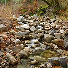 Lovely country stream - Carmel Valley, CA by nortonlo