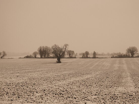 The Fields - Sepia by Pamela Jayne Smith