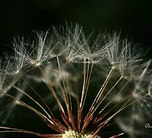 Dandy Seedlings by Briana McNair