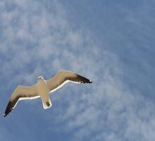 Blue Gull by Deon de Waal
