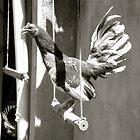 Rooster in Coronado by Scott K Wimer