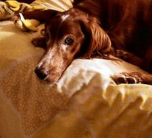 Molly by Barb Miller