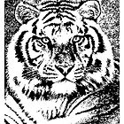 SIBERIAN TIGER by OTIS PORRITT